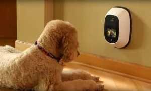 Гаджеты для домашних животных – видео